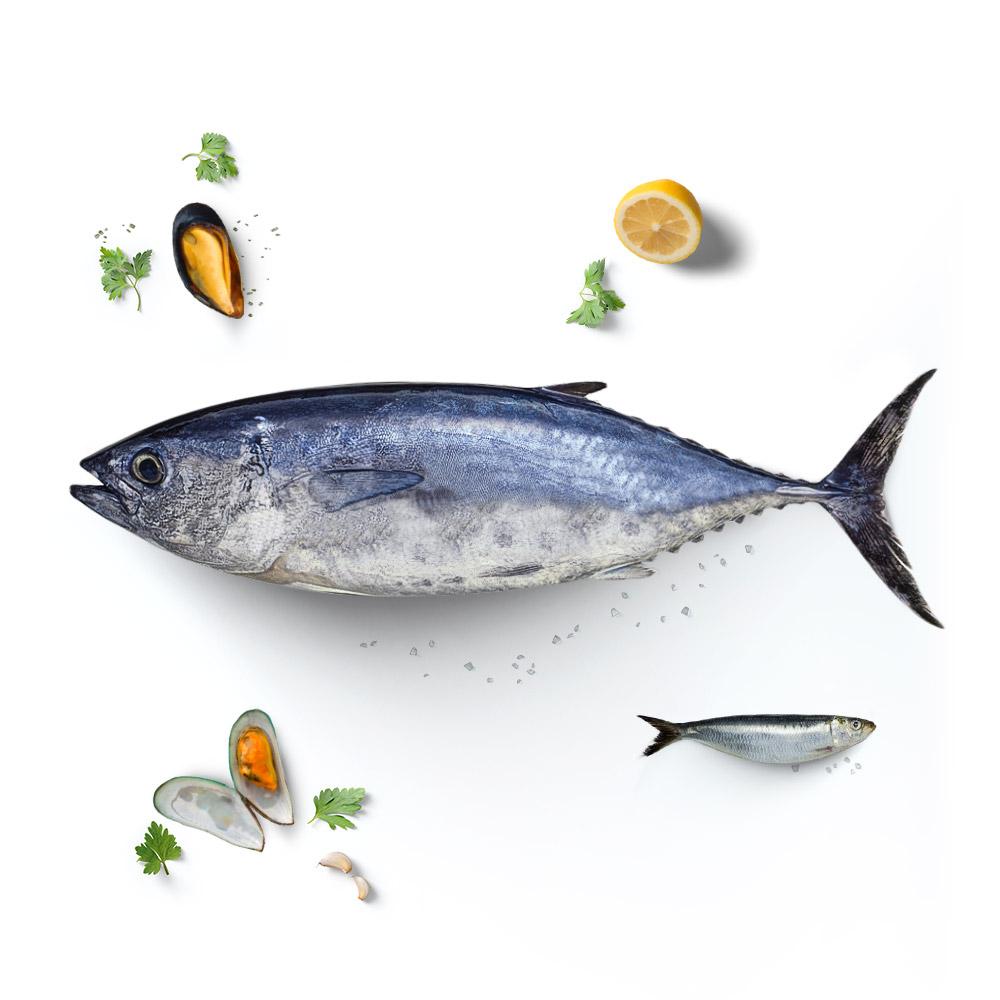 konserven Fisch Muscheln Thunfisch